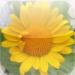Wild Flora – wild flowers of Central Europe